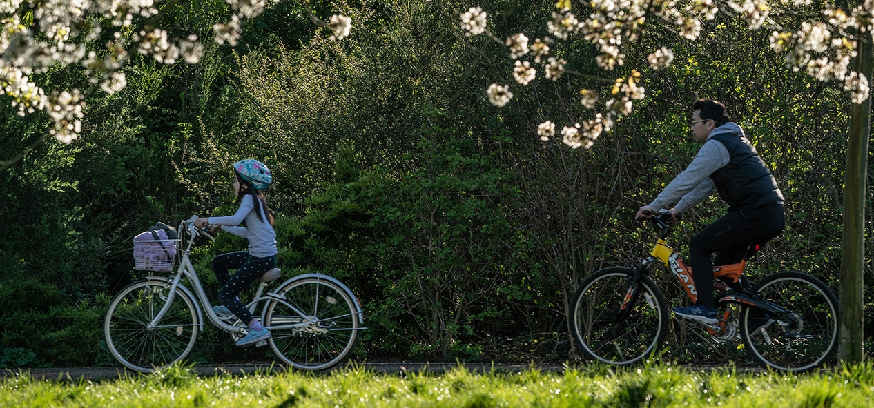 A father and daughter ride their bikes in a park.