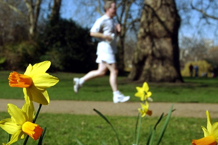 A man runs in a park, in front of some daffodils